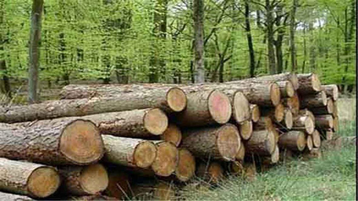کشف چوب آلات جنگلی قاچاق در عباس آباد