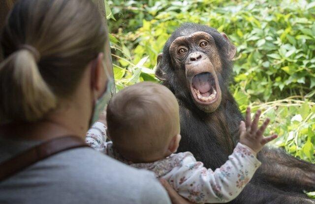 عکس های منتخب حیات وحش در هفته ای که گذشت