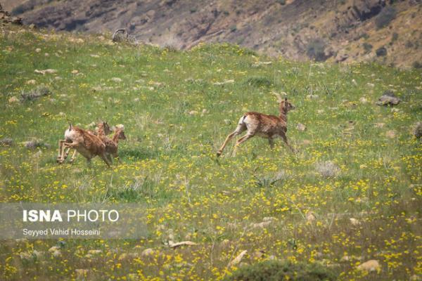 تداوم ممنوعیت صید و شکار در استان تهران طی فصل بهار
