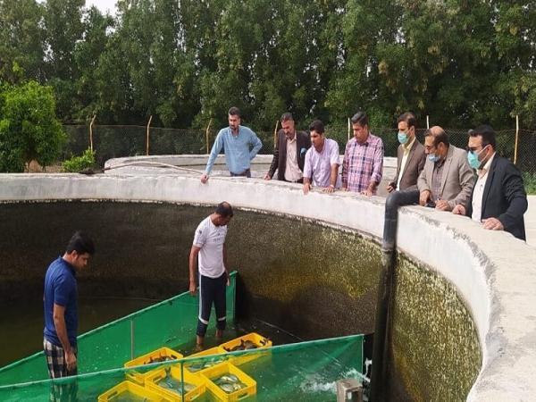خبرنگاران برداشت ماهی از استخرهای ذخیره آب کشاورزی گتوند شروع شد