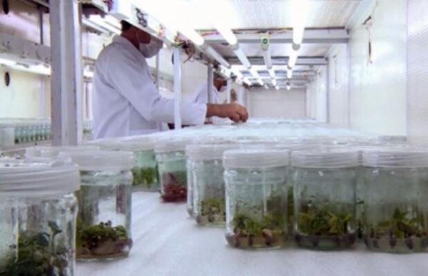 اجرای 5 برنامه ملی کشاورزی توسط ستاد زیست فناوری
