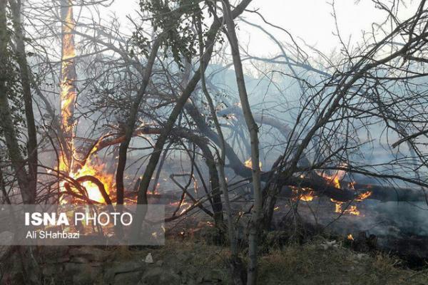 دلیل آتش سوزی باغات فریزهند تعیین نیست، کشاورزان خسارت دیده بیمه نبودند