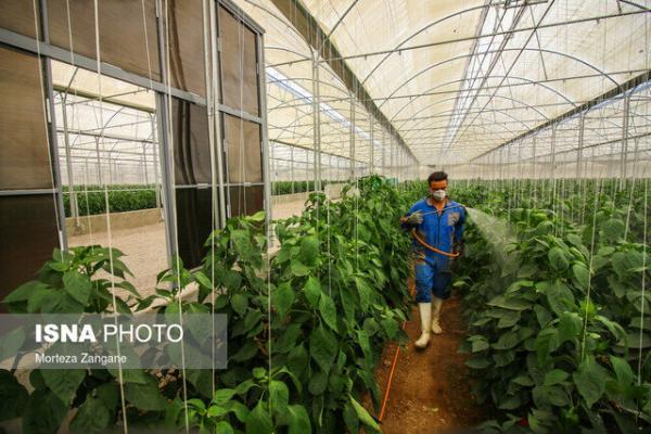 محدودیت تسهیلاتی برای گلخانه های خراسان جنوبی